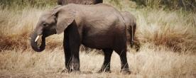 Kenya - pretrip 119